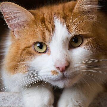 Puss Puss by Froggie