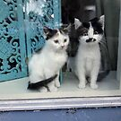 Kittens in the window by ienemien