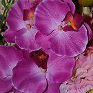 Flowers by Kylie Van Ingen