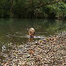 River dog by Bernadette Madden
