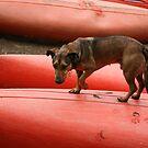 Hunting dog by Bernadette Madden