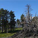 After Etna by Steve plowman