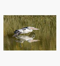 Pelican on the Murray 01 Photographic Print