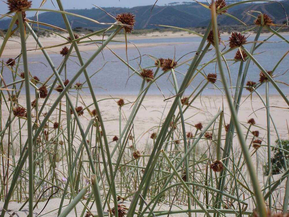 seaside by catherine bracegirdle