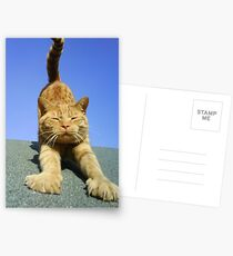 cat stretching on a sunny day Postcards