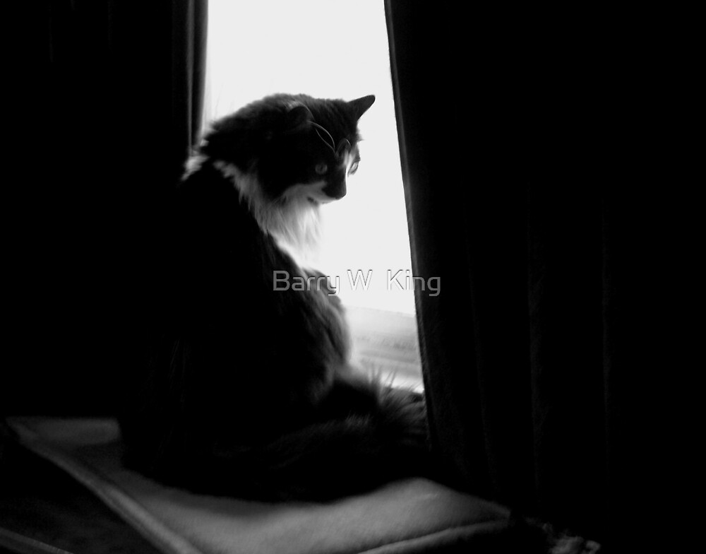 cat in black n white by Barry W  King