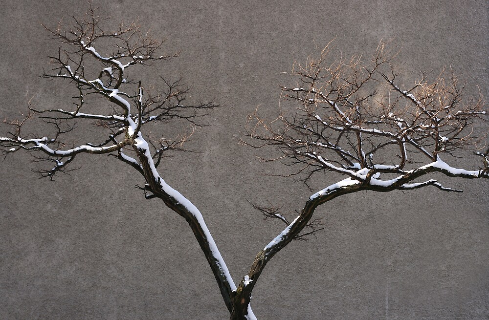 Urban Nature by pusztafia