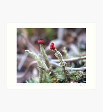 Tiny Red Tops Art Print