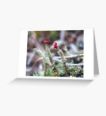 Tiny Red Tops Greeting Card