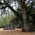 A Sheltering Oak - Indian Grinding Stone State Historic Park, Amador County, CA by Rebel Kreklow