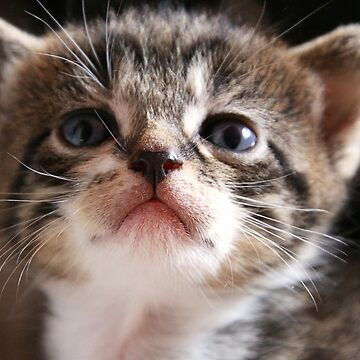 Curious Kitten by Jokus