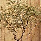 The Olive Tree......................Rome by Fara