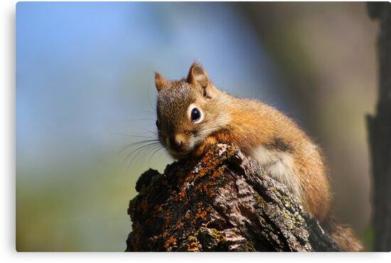 Baby Squirrel by Teresa Zieba
