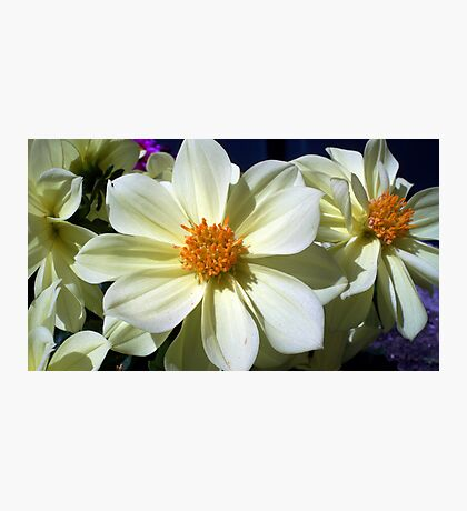 Splendid flowers Photographic Print