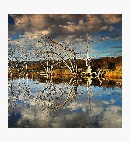 The Dali Trees Photographic Print