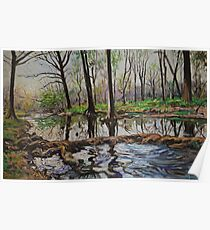 Cypress Creek in Wimberley, Texas Poster