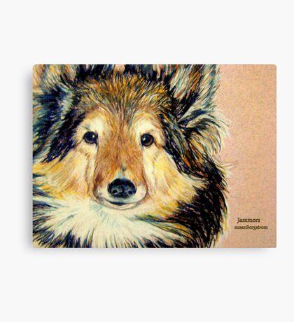 Jammers...Portrait Of A Sheltie Canvas Print