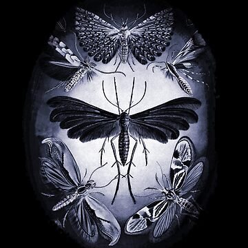 Moths in Purple Light by dianegaddis
