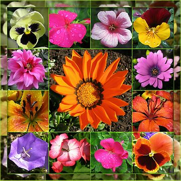 Sunlit Summer Flowers Collage by BlueMoonRose