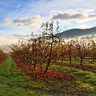 Winter Orchard by Chris Cobern