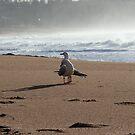 Birds in Paradise by coastal