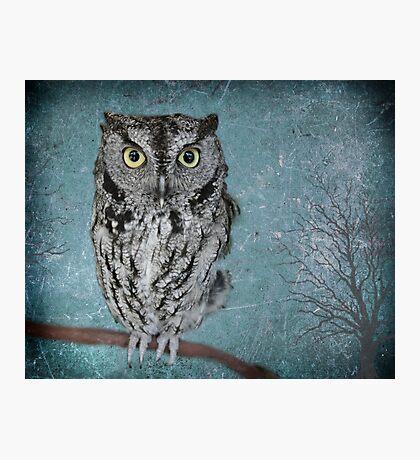 Screech Owl Photographic Print