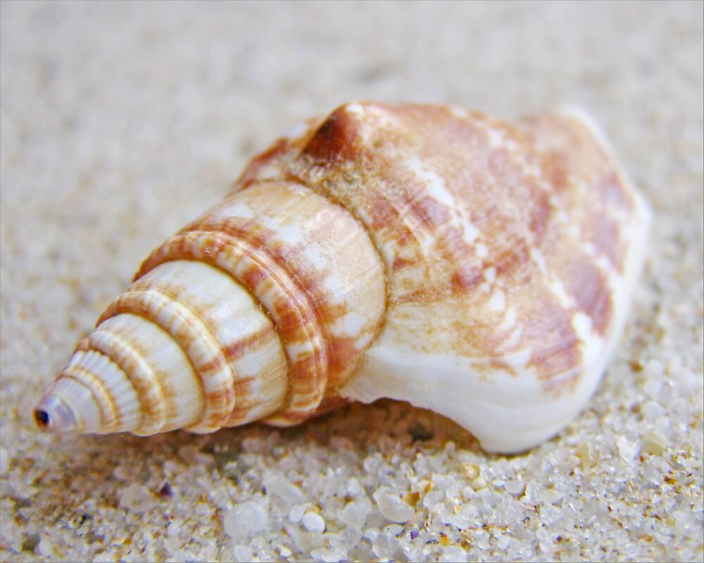 Beautiful Shell  von Sim Baker