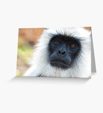 Hanuman Langur Portrait Greeting Card