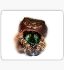 Jumping Spider Molt Sticker