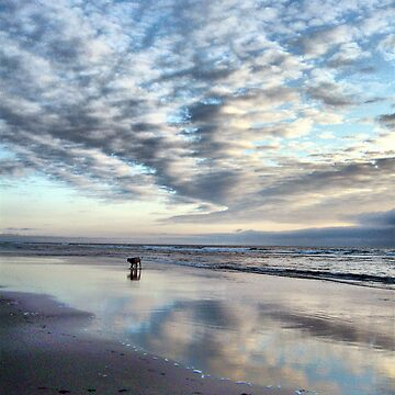 Clam Beach Canines by cnik