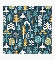 Snowy woods on dark blue background Photographic Print