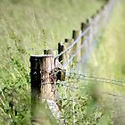 Corner Post  by Photography  by Mathilde