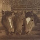 Three Horses  by Brittney LeBlanc