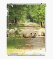 Five Sheep Blocking The Road iPad Case/Skin