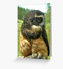OWL,  Greeting Card