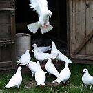 White Doves by AnnDixon