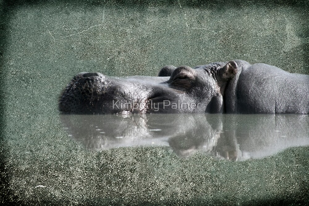 Hippo by Kimberly Palmer