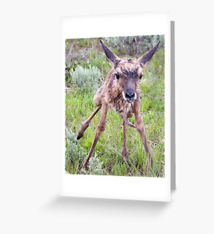 Teetering Antelope Fawn Greeting Card
