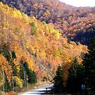 Autumn Splendor-Cabot Trail by George Cousins