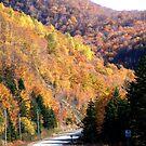 Autumn Splendor-Cabot Trail by George Cousins
