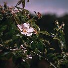 «Flor de primavera» de GemAysh