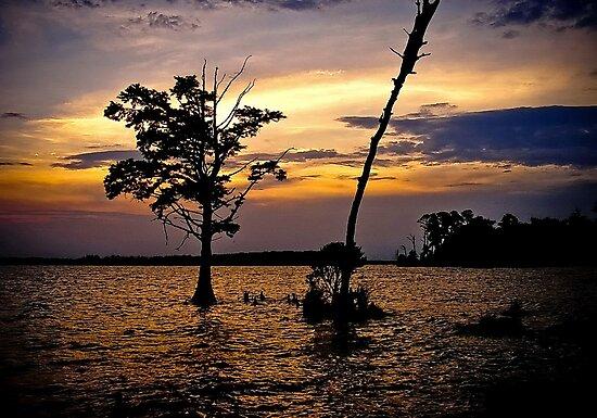 Inter coastal Sunset  by Jeff Lewis