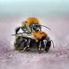 Bee Porn by Melanie Collette