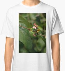 Collecting nectar for making honey Classic T-Shirt