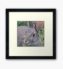 el Bunny Bandito Framed Print