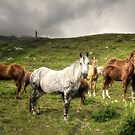 White horse by Roberto Pagani
