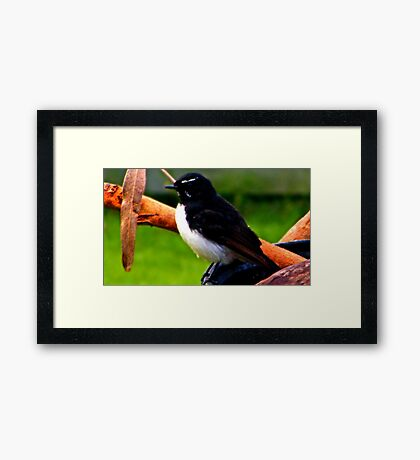 Willie Wagtail ( perch upon old bonfire) Framed Print