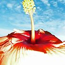 Sky Hibiscus by ShotsOfLove