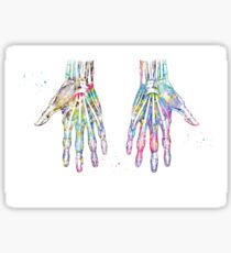 Hand Muscles Sticker