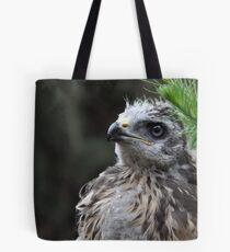 Common Buzzard Chick ( Buteo buteo) Tote Bag